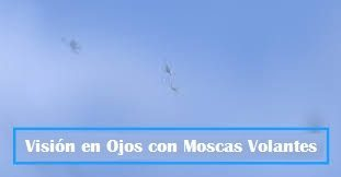 imagen moscas volantes