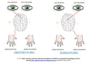 esquema lateral ojo-mano